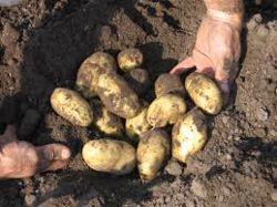 Onderdelen aardappelrooiers